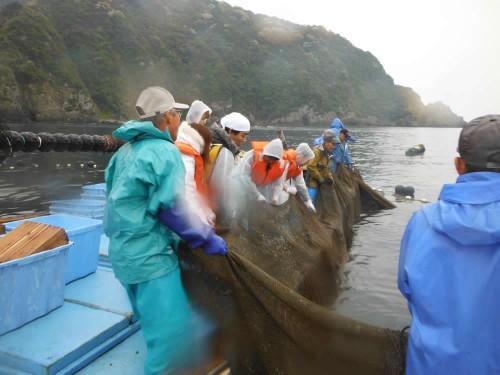 定置網漁体験中