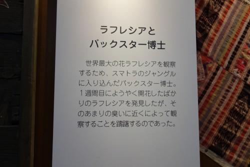 バックスター博士&花2