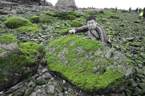 海藻がいっぱい