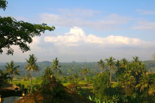 バリ島の森