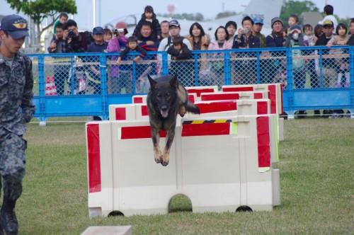 警備犬ジャンプ