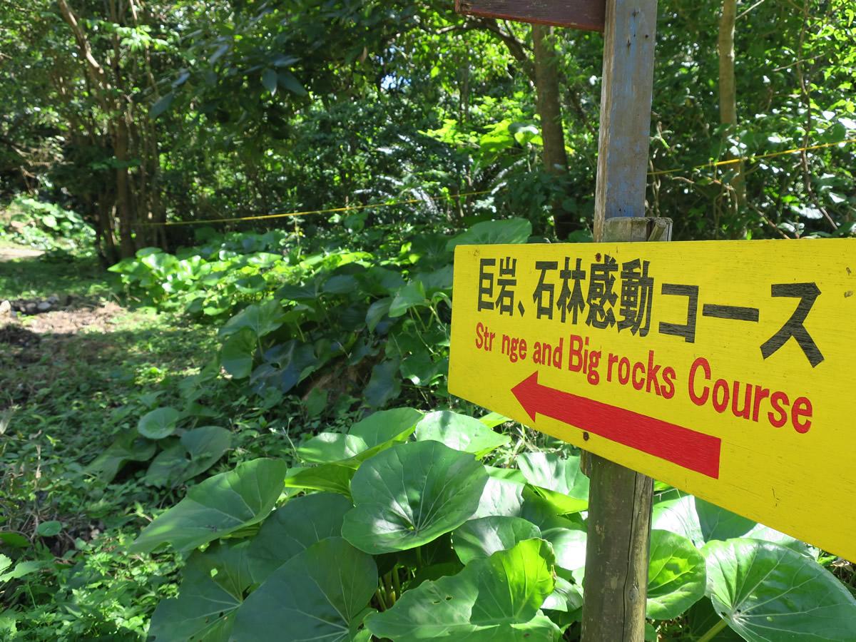 石林感動コース