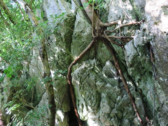 岩に根を張る