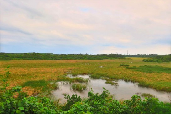 池間島の湿地