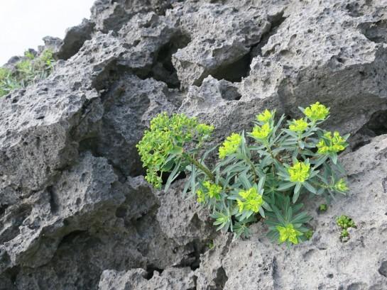 崖に咲く花