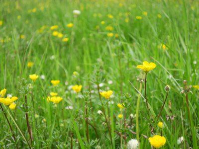 綺麗な草むら