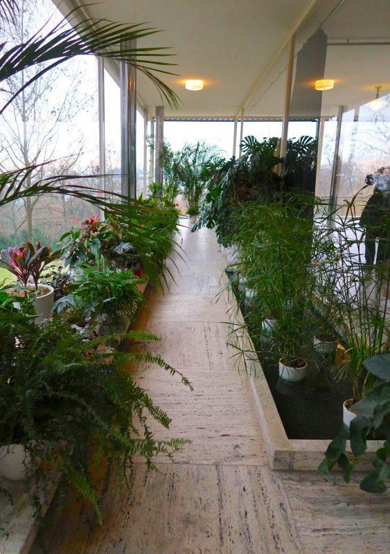 植物がいっぱい