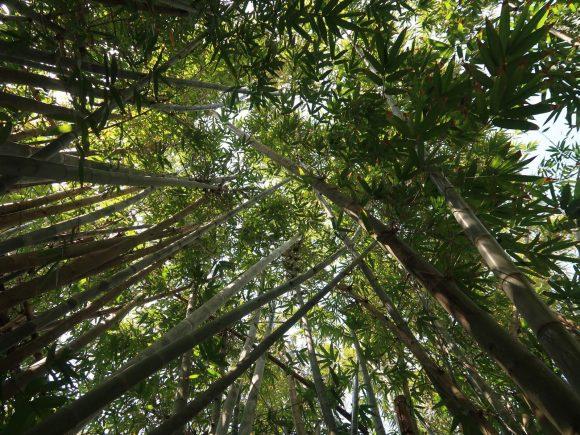 竹もあります。