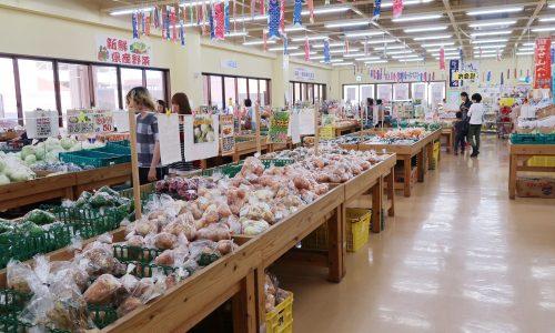 新鮮県産野菜