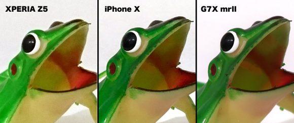 カエルのアップ
