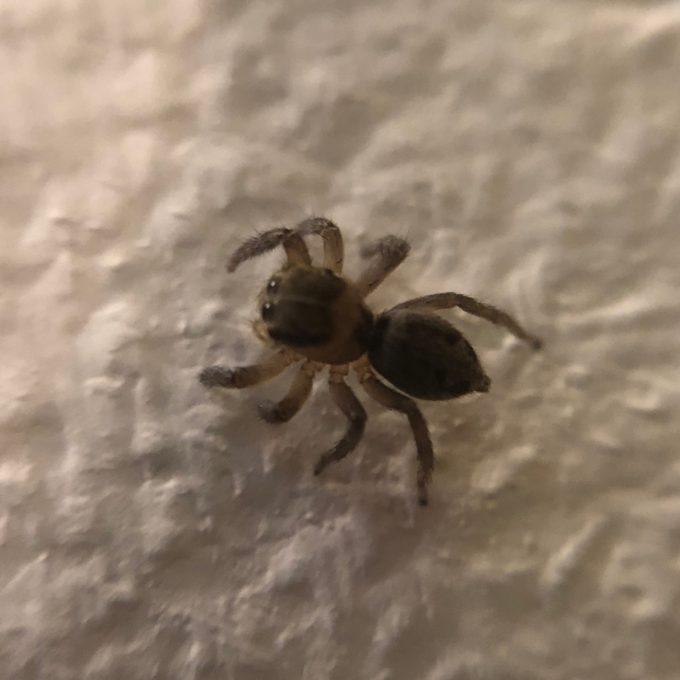 15Xマクロレンズで蜘蛛を撮る