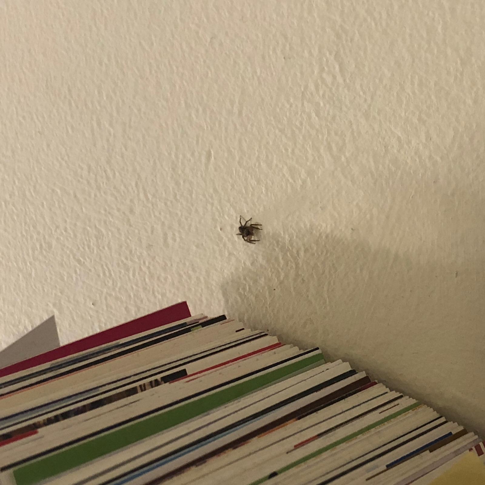 iPhoneX等倍で蜘蛛を撮る