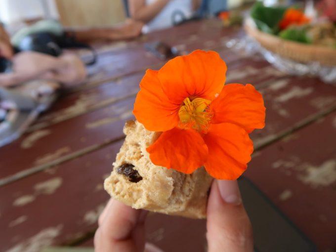 花も食べられます