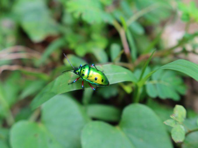 きれいな虫