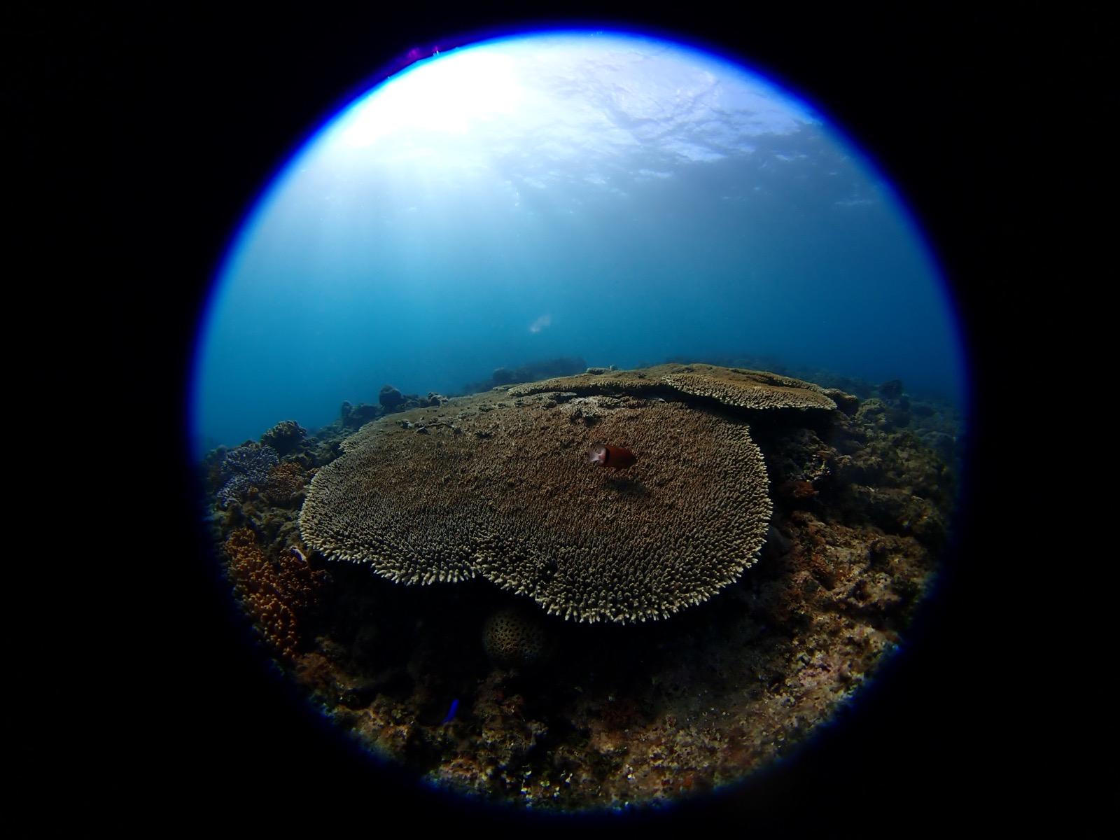 海の写真は魚眼が楽しい! OLYMPUS Tough TG-6 & FCON-T02 レビュー
