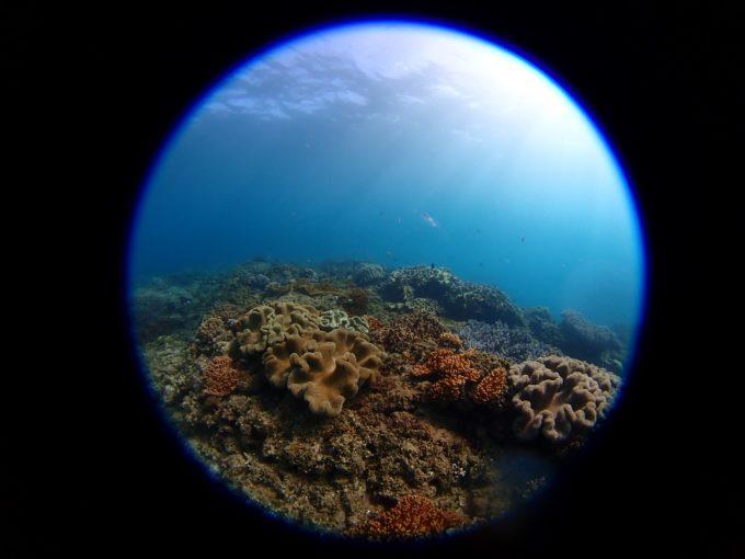 珊瑚その2