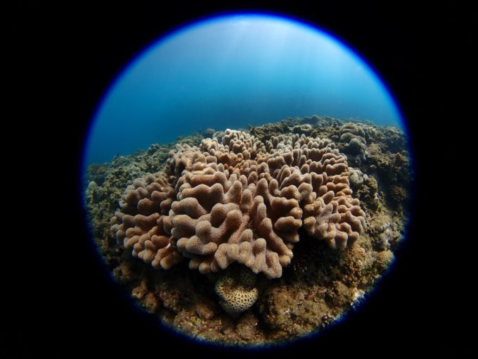 珊瑚その3